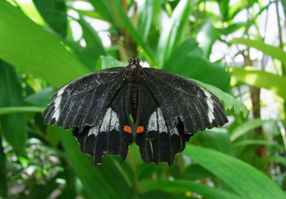 Fotografia przedstawiająca motyla