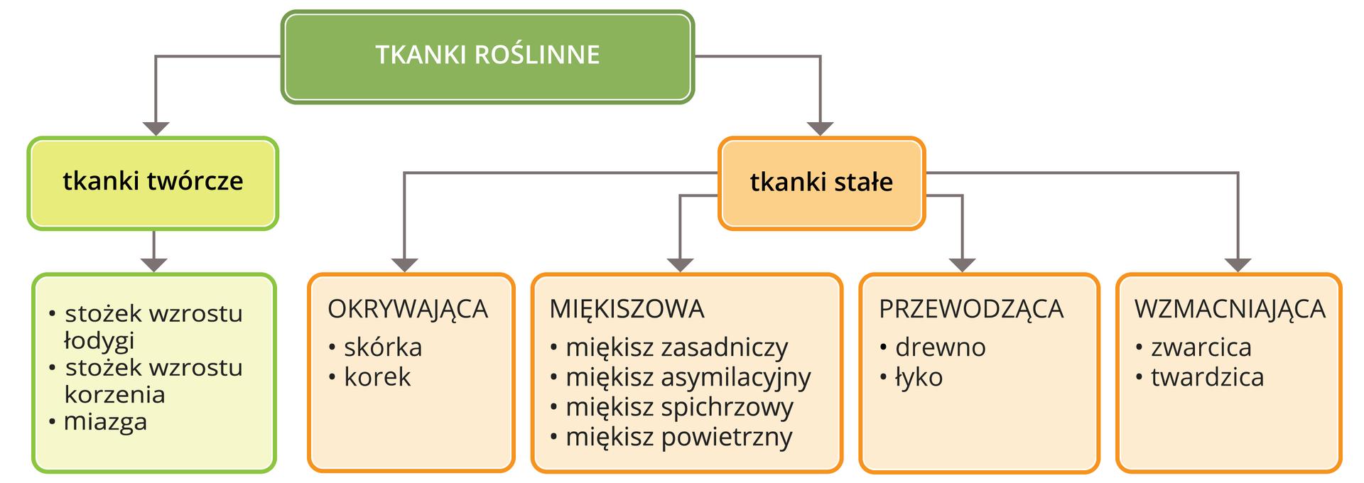 Ilustracja przedstawia podział tkanek roślinych wpostaci schematu blokowego.