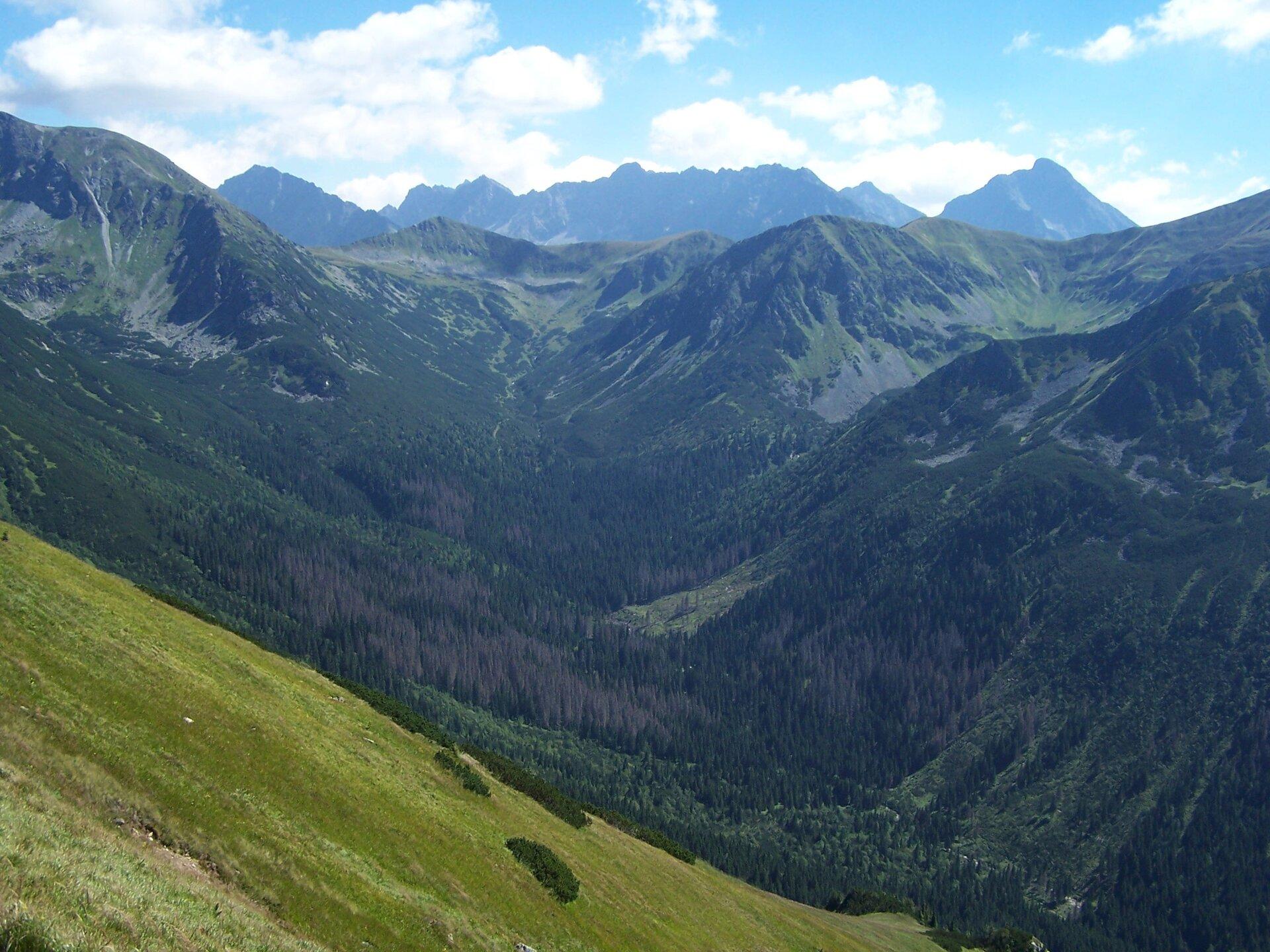 Dolina Wierchcicha Źródło: Jerzy Opioła, Dolina Wierchcicha, licencja: CC BY-SA 4.0.