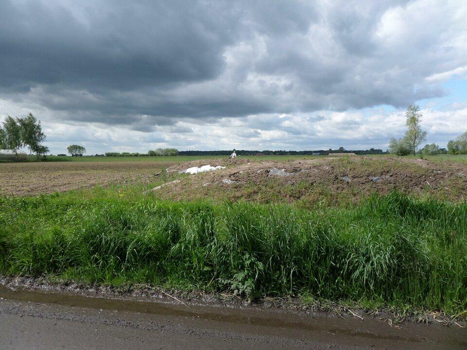 Na zdjęciu płaski teren rolniczy. Na pierwszym planie błotnista droga gruntowa.