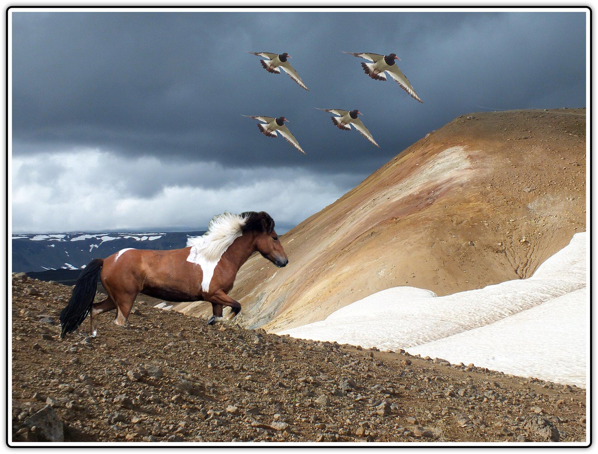 Fotografia po fotomontażu przedstawiająca widok gór, konia islandzkiego icztery ptaki