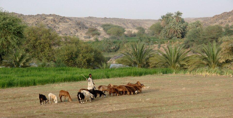Na zdjęciu pasterz ze stadem kóz na pastwisku, wtle pola uprawne, drzewa, dalej góry.