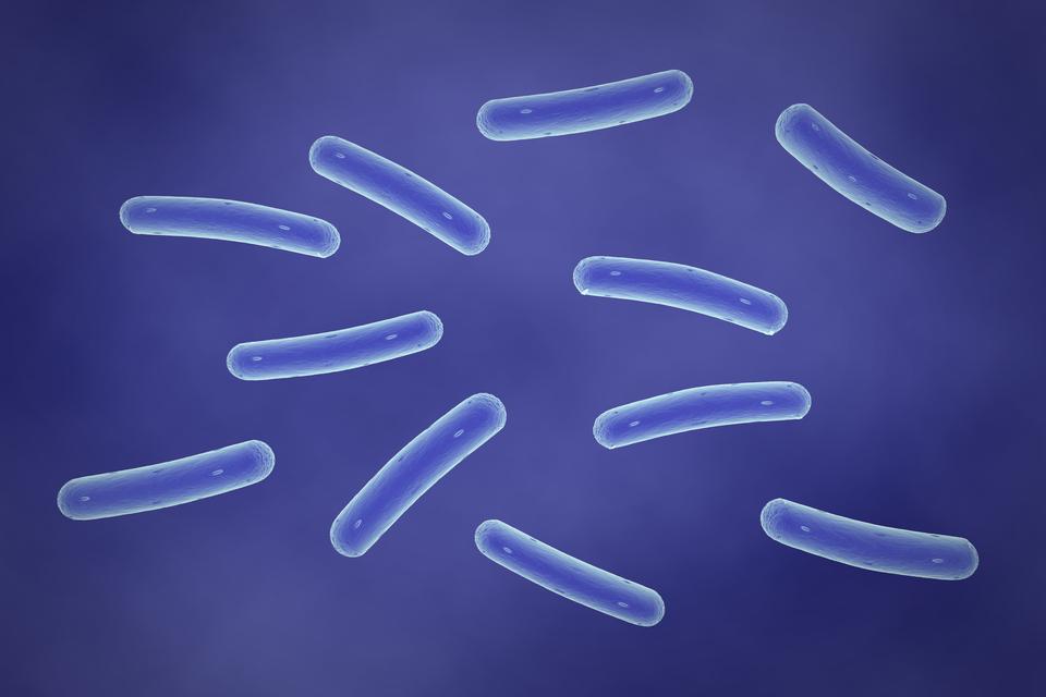 Pokaz slajdów przedstawiający: slajd 1 – pałeczka salmonelli, slajd 2 - skóra zobjawami świerzbu, slajd 3 - paznokcie zgrzybicą, slajd 4 - pies zwścieklizną, slajd 5 – pałeczka tężca