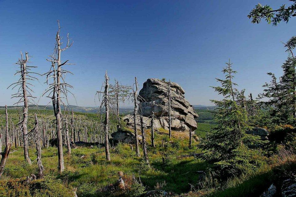 Na zdjęciu suche pnie drzew wterenie górzystym.