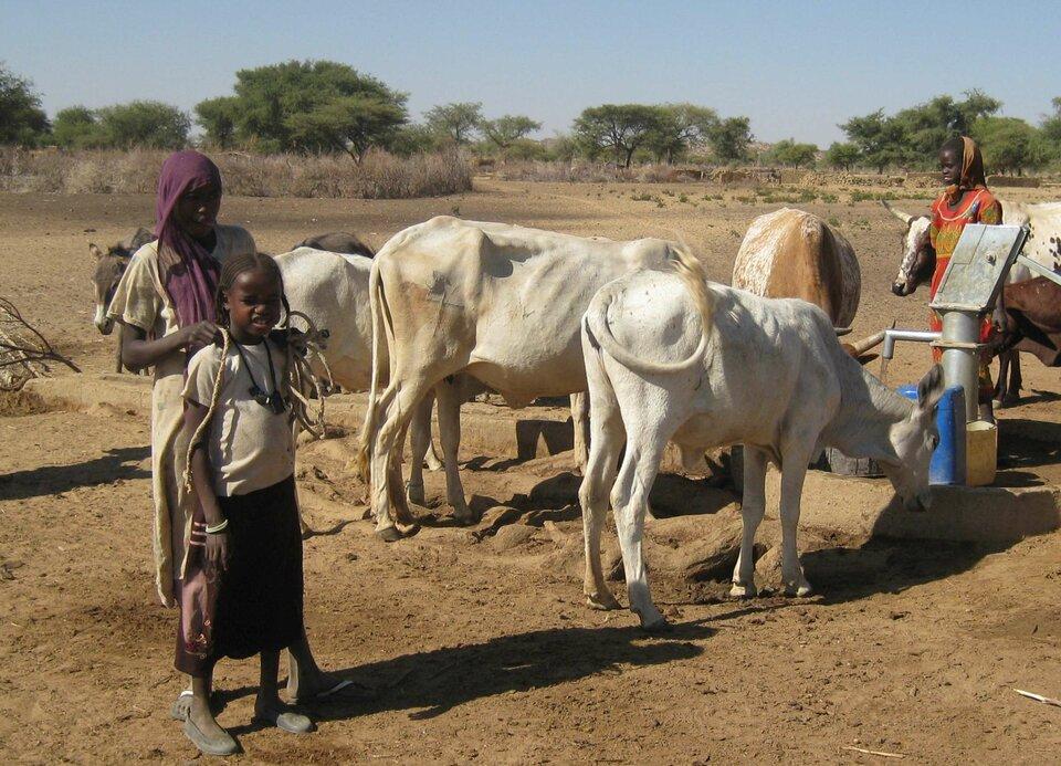 Na zdjęciu krowy, osioł piją wodę koło studni. Obok kobiety.