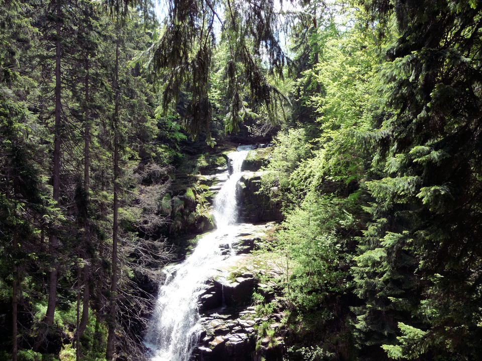 Fotografia prezentuje wodospad górski Kamieńczyk dookoła, którego rosną wysokie świerki.