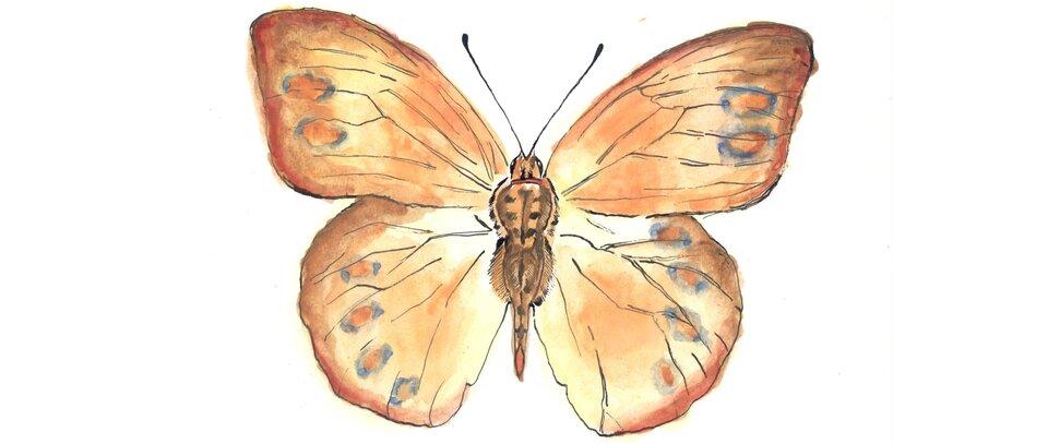 Rysunek motyla.