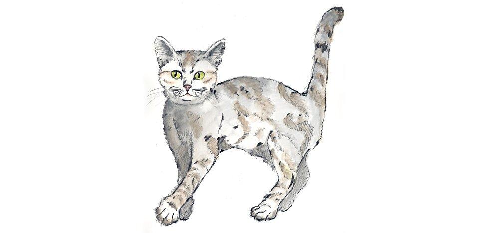 Rysunek kota.