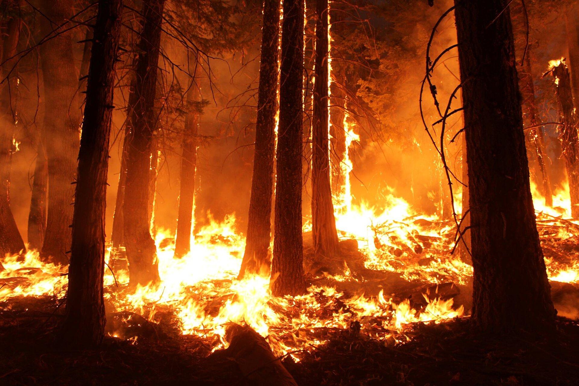 Fotografia prezentuje pożar lasu. Na pierwszym planie widoczna paląca się ściółka oraz pnie drzew. Wtle palące się pnie drzew, duże ilości dymu ijasnych płomieni ognia.