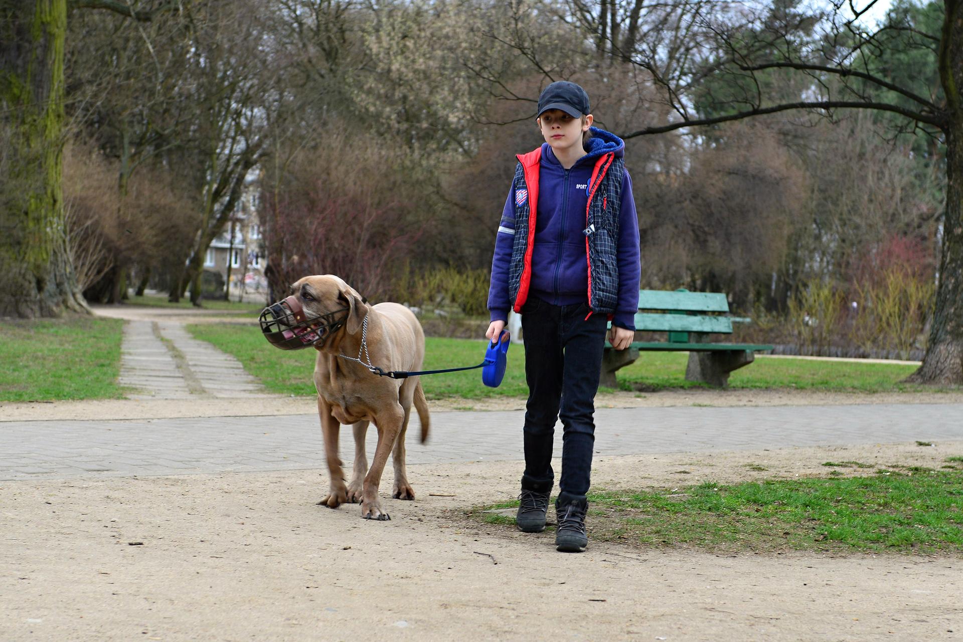 Galeria slajdów ukazujących sposoby opiekowania się zwierzętami. Slajd 1 – prezentuje dużego psa znałożonym na pysk kagańcem iprowadzonego na smyczy przez właściciela.