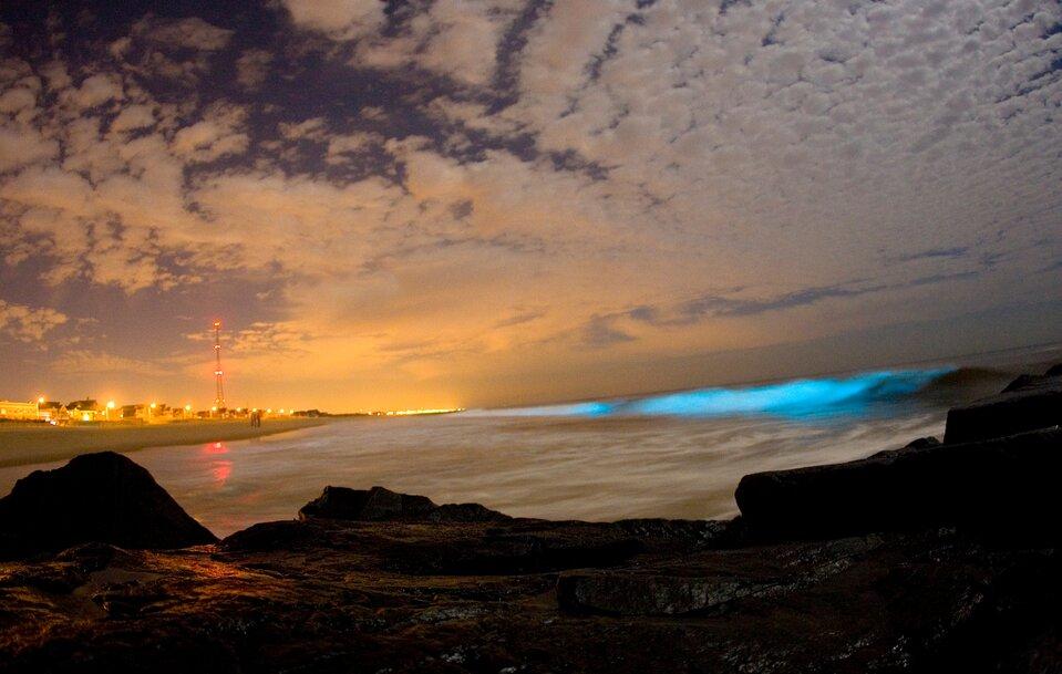 Fotografia przedstawia nadmorski krajobraz wieczorem. Na pierwszym planie ciemne skały, wgłębi światła miasta, na górze liliowe niebo zchmurami. Wmorzu zprawej wznosi się fala wniebieskim neonowym kolorze. To zabarwienie wywołały bakterie bioluminescencyjne.