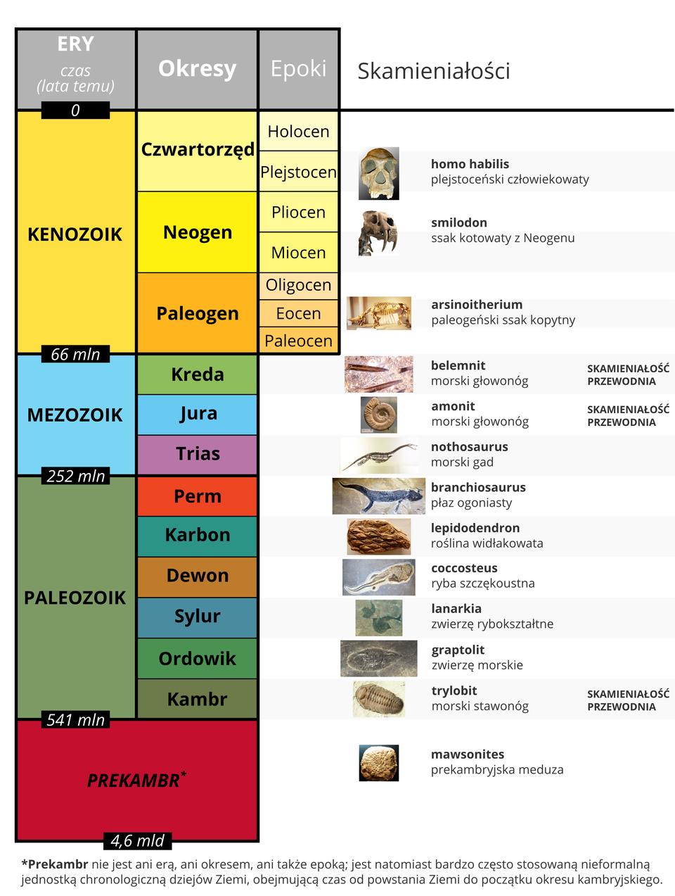 Ważniejsze skamieniałości wdziejach Ziemi