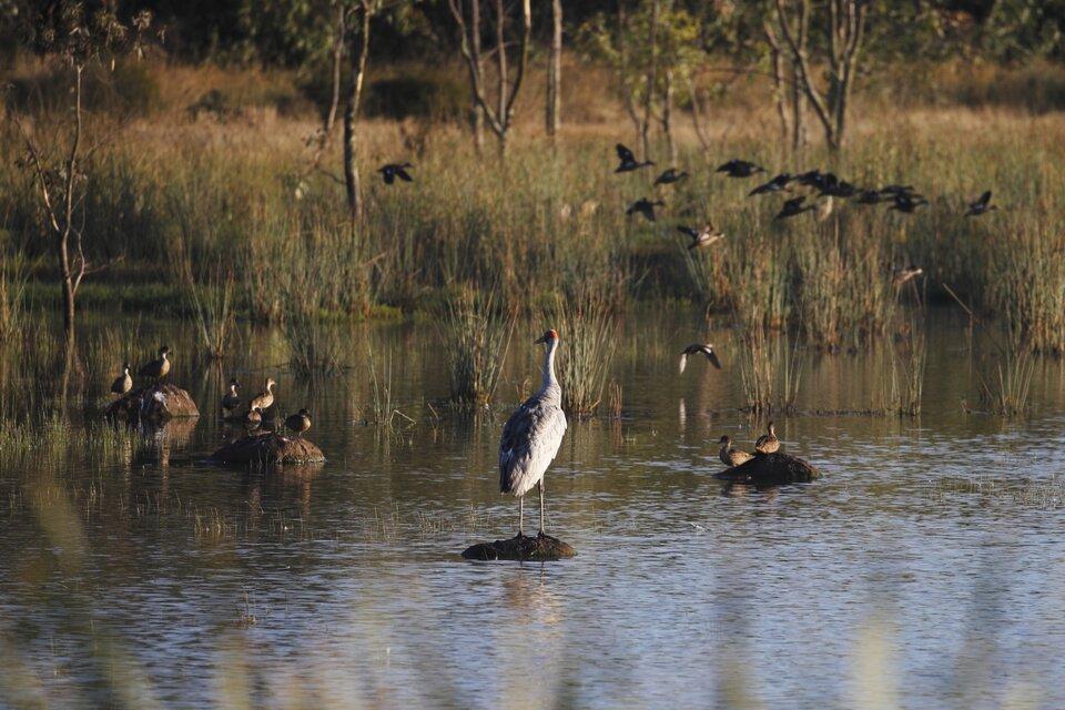 Zdjęcie przedstawia mokradła. Widać teren zalany płytką wodą.Spod wody wystają fragmenty podłoża oraz trawy iinne rośliny. Wwodzie brodzą ptaki, inne siedzą na podłożu niezalanym przez wodę.