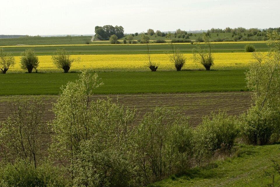 Na zdjęciu równinne zielone tereny, pole żółtego rzepaku, pojedyncze drzewa ikrzewy.