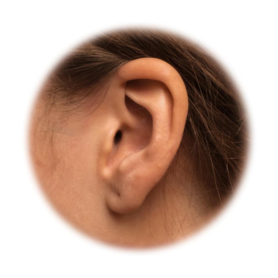 Fotografia przedstawia zbliżenie ludzkiego ucha. Dzięki umiejscowieniu uszu po przeciwnych stronach głowy możemy ocenić, zktórego kierunku dociera do nas dźwięk.