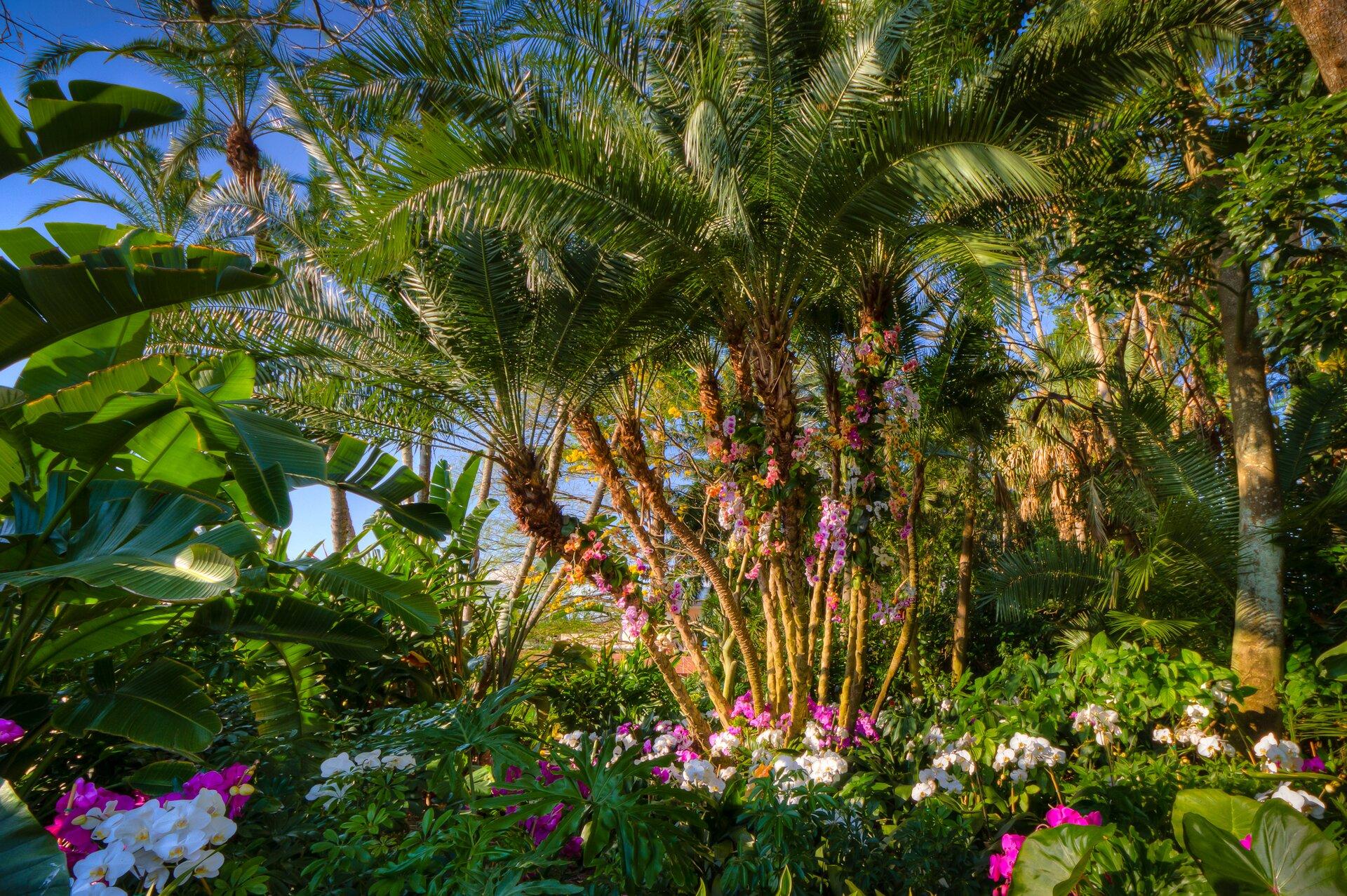 Fotografia czwarta prezentuje białe iróżowe kwiaty orchidei osadzone na pniu palmy. Podobne kwiaty rosną na polanie przed palmą.