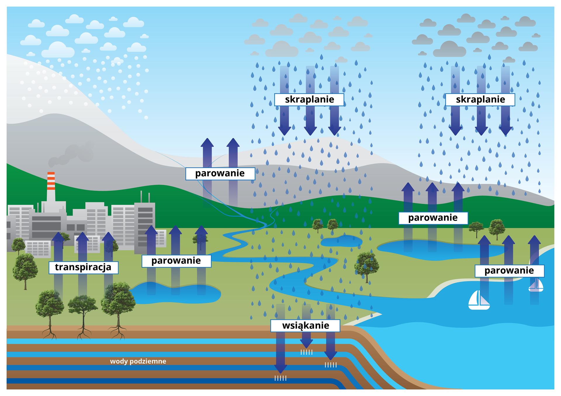 Krążenie wody wprzyrodzieIlustracja przedstawia schemat krążenia wody wprzyrodzie. Wtle znajdują się szare góry, zktórych spływa niebieska rzeka. Obok zlewej kilka budynków symbolizuje miasto, niebieska plama to zbiornik wodny, aprzed nim zielone drzewa zkorzeniami. Ze zbiornika woda paruje, azroślin transpiruje. Korzenie znajdują się wglebie, gdzie sięgają niebieskich pasków wody podziemnej. Zprawej jest niebieskie może zbiałymi żaglówkami. Zjego powierzchni też następuje parowanie (strzałki wgórę). Zchmur opada deszcz iśnieg, czyli jest to skraplanie, uzupełniające zasoby wody wzbiornikach powierzchniowych. Część wody wsiąka wgrunt, uzupełniając zasoby wód podziemnych.