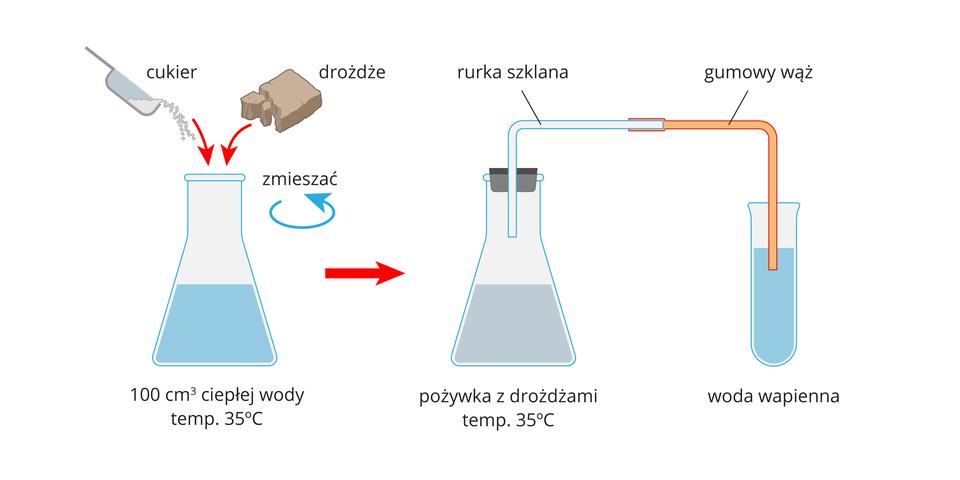 Ilustracja przedstawia sposób założenia doświadczenia do badania wydzielania dwutlenku węgla przez drożdże.