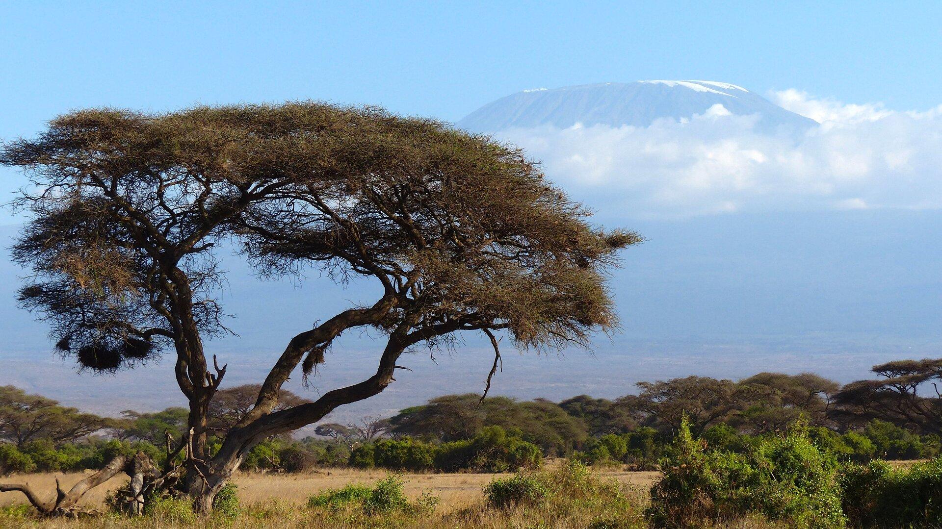 Fotografia prezentuje przykład krajobrazu astrefowego. Na fotografii zlewej strony widoczna rozłożysta akacja; wjej pobliżu rosną krzewy. Na drugim planie liczne drzewa akacjowe oraz krzewy, awtle wysoka góra Kilimandżaro przysłonięta chmurami.
