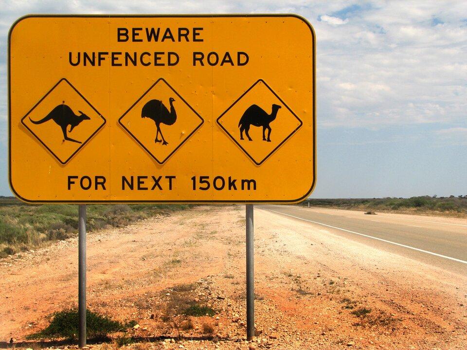 Na ilustracji tablica informacyjna ustawiona na żwirowym poboczu przy drodze asfaltowej. Na tablicy napisy ipiktogramy zwierząt: kangur, struś, wielbłąd.
