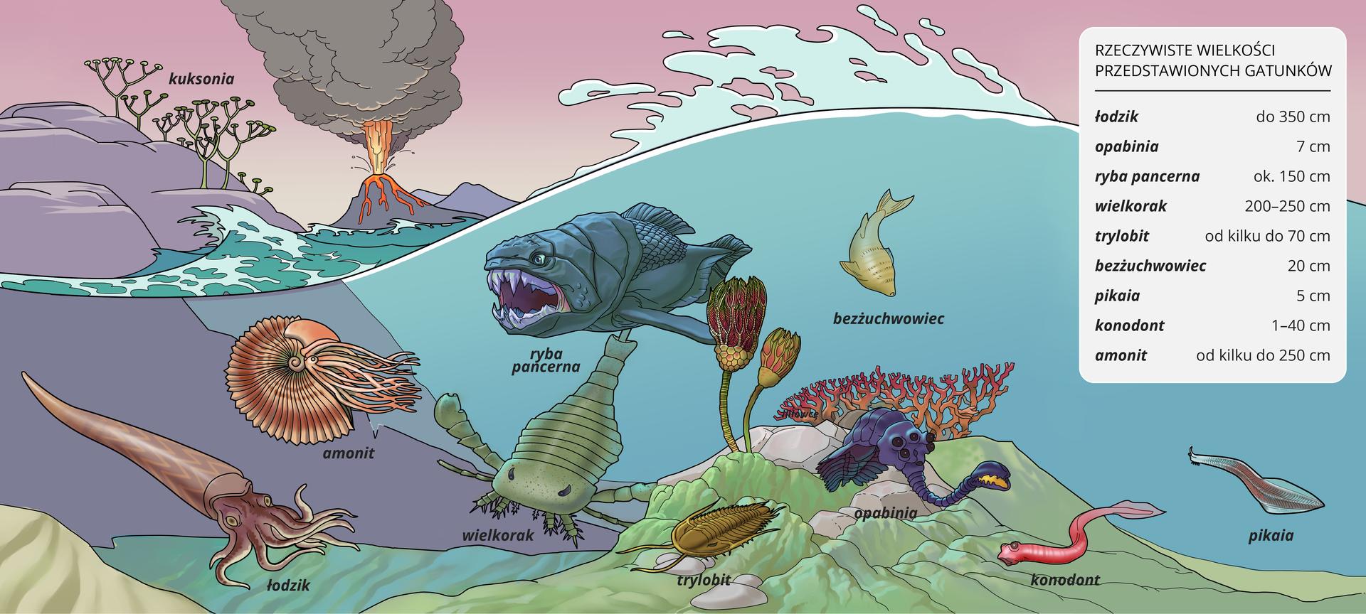 Era zwierząt wodnych