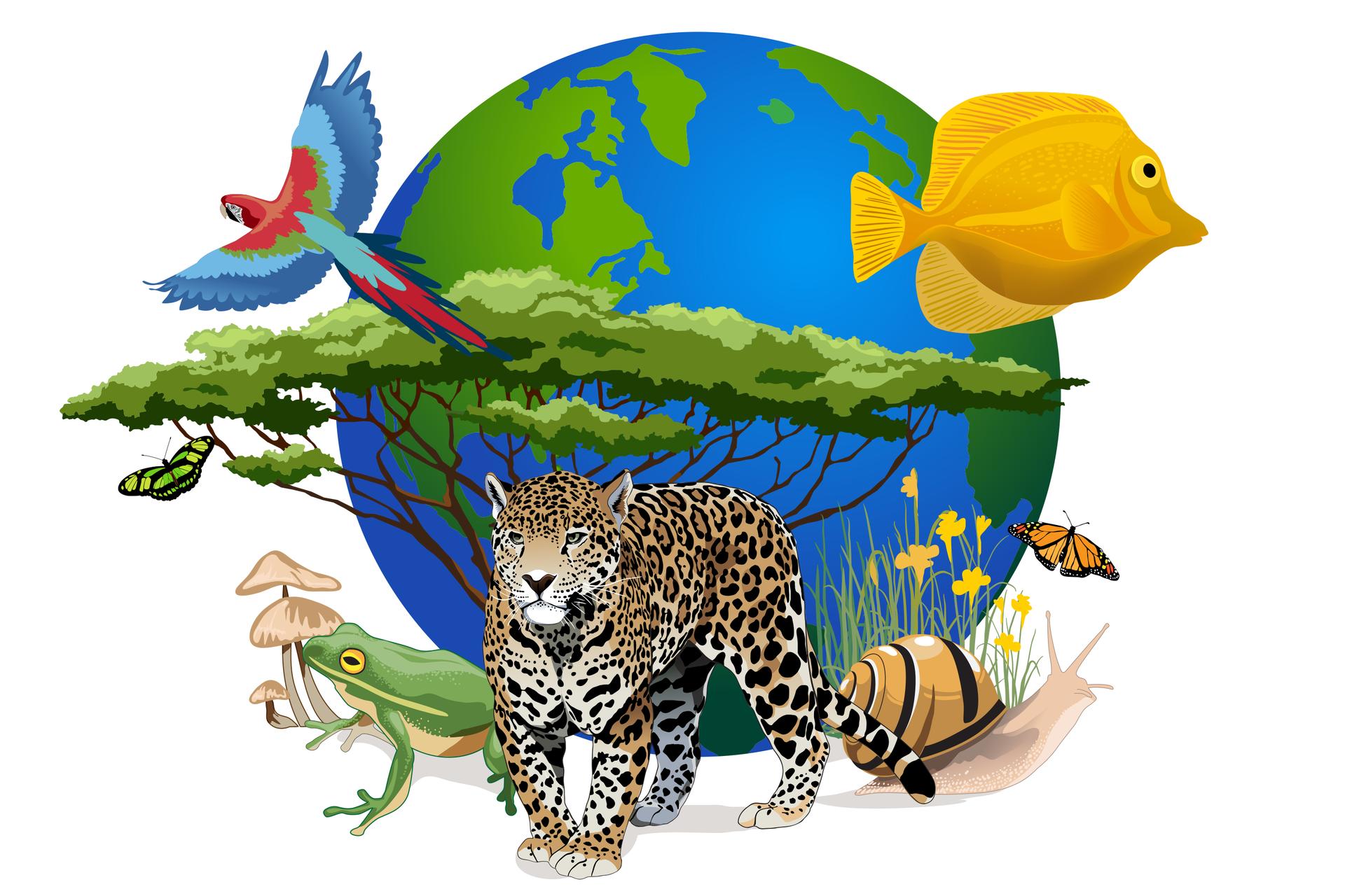 Ilustracja prezentuje niebiesko-żółtą kulę Ziemską, na tle której umieszczono kolorową papugę, żółtą rybę, akacje, zieloną żabę, grzyby, motyle, ślimaka oraz jaguara.