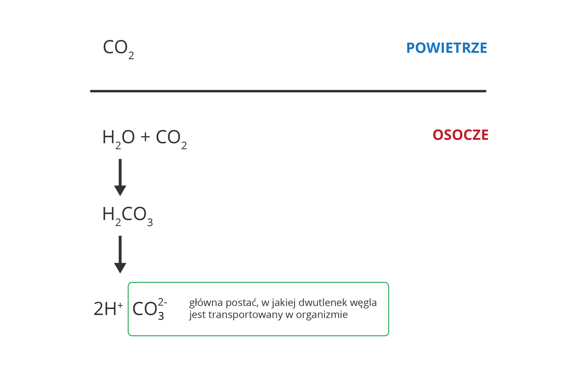 Ilustracja przedstawia reakcję chemiczną wosoczu, umożliwiającą transport dwutlenku węgla. Użyte symbole chemiczne. Ugóry symbol dwutlenku węgla iniebieski napis powietrze. Pod poziomą kreską czerwony napis: osocze ireakcja woda plus dwutlenek węgla. Od niej strzałka wdół do produktu reakcji: kwasu węglowego. Niżej produkty jego dysocjacji: dwa protony wodoru ijon węglanowy. Ramka oznacza, że głównie wpostaci jonu węglanowego dwutlenek węgla jest transportowany worganizmie.