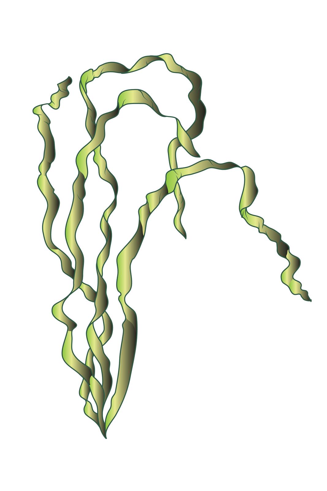Ilustracja przedstawia trzy zielone, długie, skręcone wstęgi. Wyrastają zjednego miejsca udołu. To glon zgrupy zielenic.