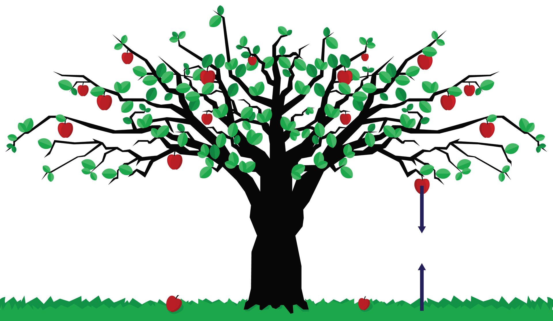 Na schemacie zaprezentowano drzewo. Tło białe. Kora drzewa czarna. Korona drzewa rozłożysta, zajmuje całą szerokość schematu. Na gałęziach znajdują się zielone liście iczerwone jabłka. Na dole widnieje niska trawa. Zprawej strony drzewa, od jednego zjabłek odchodzi wektor. Kierunek prostopadły do podłoża. Zwrot ku ziemi. Punkt przyłożenia na środku jabłka. Punkt przyłożenie drugiego wektora znajduje się na ziemi. Wektor ma ten sam kierunek, lecz przeciwny zwrot. Wektory mają równą długość. Oba wektory leżą na tej samej prostej.