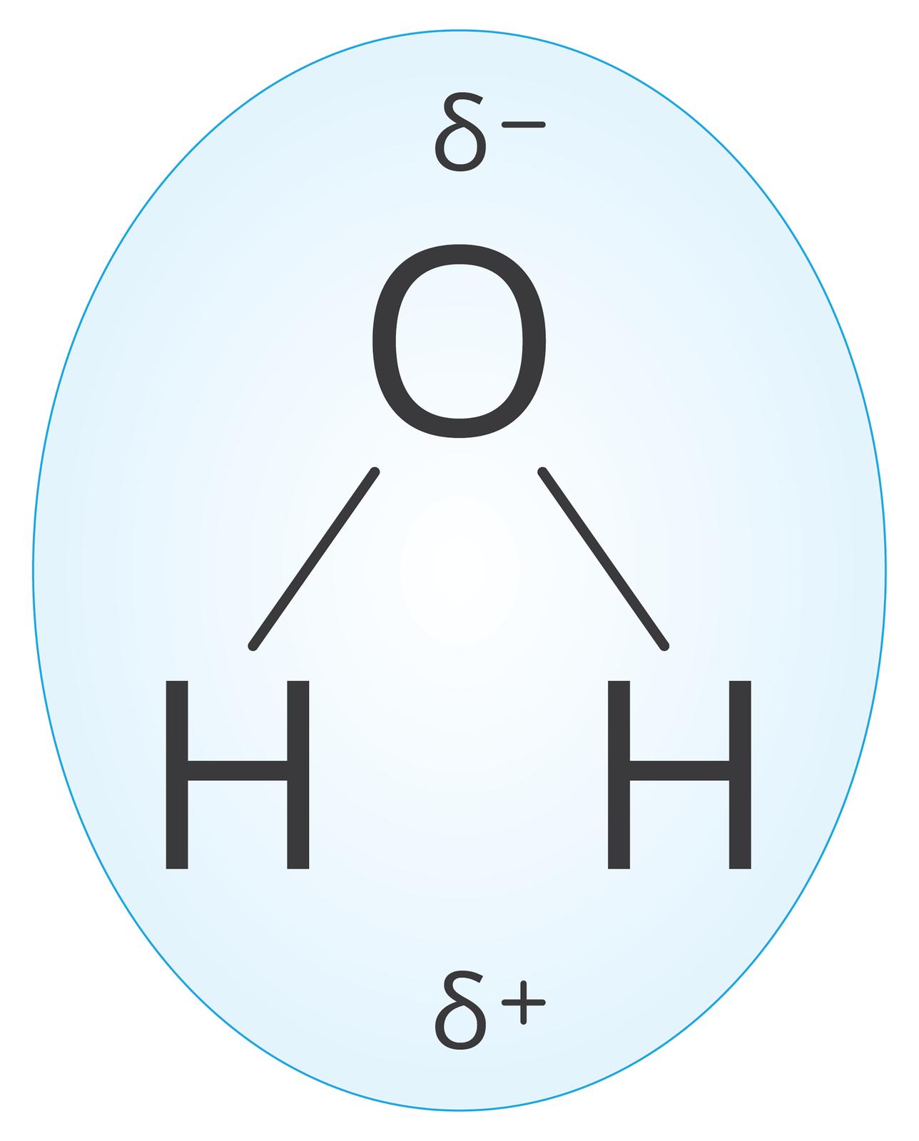 Ilustracja przedstawia model cząsteczki wody wzapisie strukturalnym. Symbol atomu tlenu Oznajduje się ugóry planszy, natomiast połączone znim pojedynczymi kreskami symbole atomów wodoru Hudołu planszy. Ponad symbolem tlenu znajduje się zapis delta minus dokonany zużyciem greckiej małej litery delta. Nieco poniżej symboli wodoru pomiędzy znakami Hznajduje się podobnie dokonany zapis delta plus. Cały model wraz zzapisami ładunków znajduje się na tle niebieskiego owalu zbłękitno białym wnętrzem, symbolizującego kroplę.