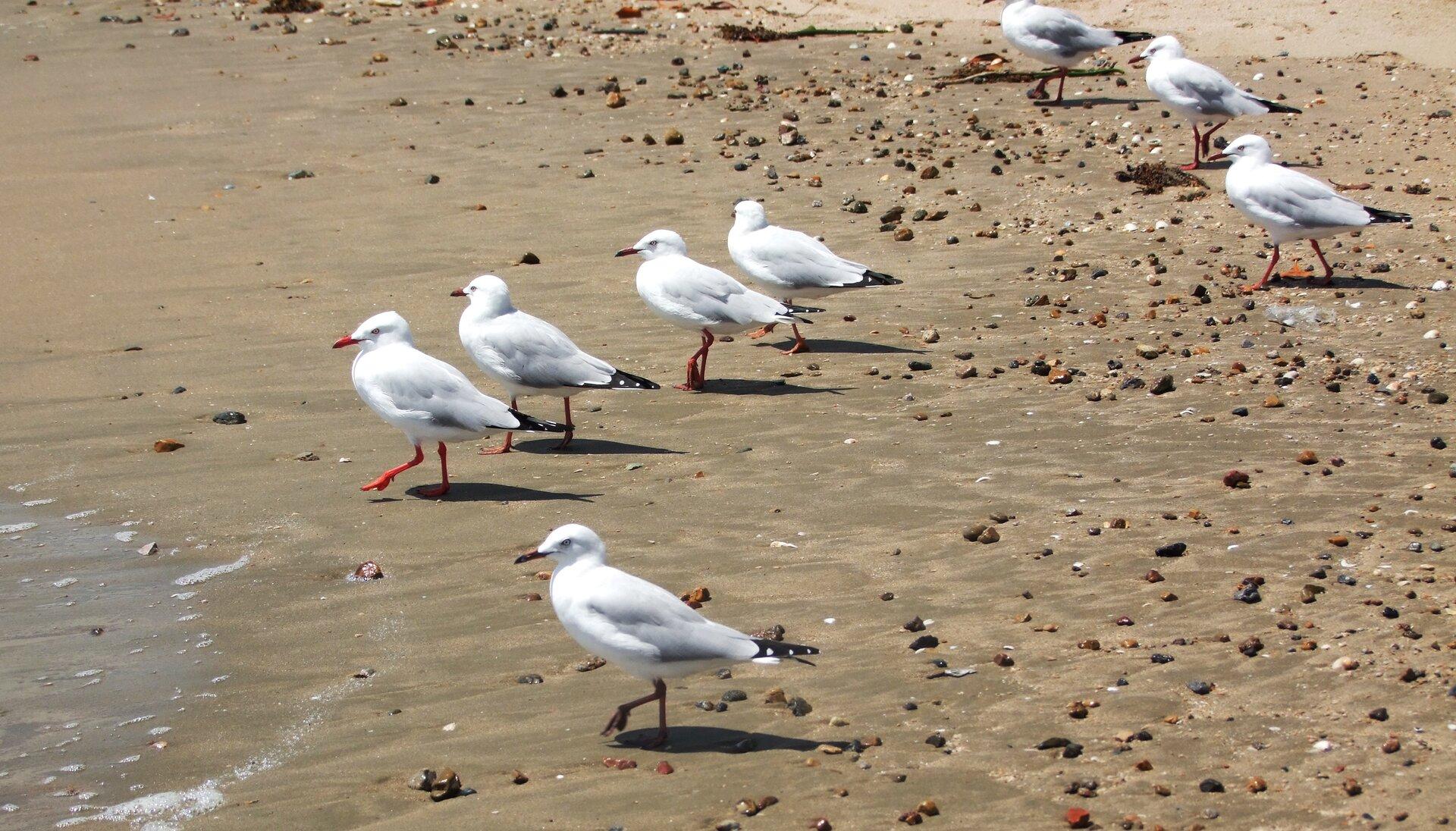 Ilustracja przedstawiająca ptaki na plaży