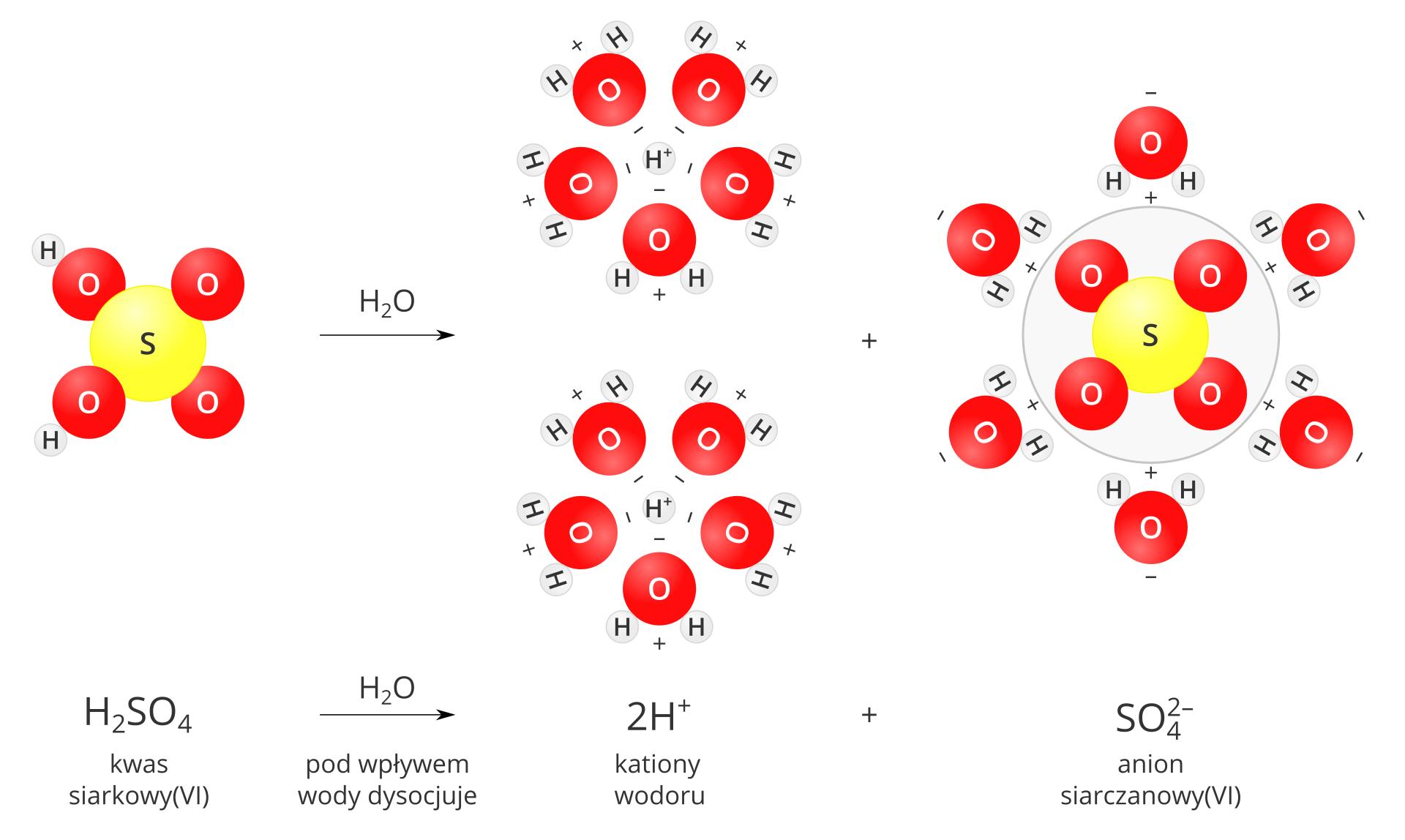 Modelowy schemat dysocjacji kwasu siarkowego sześć. Po lewej stronie planszy znajduje się model cząsteczki kwasu zbudowany zjednej żółtej kuli oznaczonej literą S, przylegających do niej czterech czerwonych kul oznaczonych literą Ooraz dwóch szarych, małych kulek oznaczonych literą H, przylegających do atomów tlenu po lewej stronie cząsteczki. Po prawej stronie modelu znajduje się znak reakcji wpostaci pojedynczej strzałki skierowanej wprawo. Nad strzałką znajduje się wzór H2O. Środkową iprawą część planszy zajmuje zapis rozpadu na jony: dwie małe szare kulki oznaczone jako Hplus, znak dodawania oraz model reszty kwasowej zżółtą kulą iliterą Swśrodku otoczony jest czterema przylegającymi do niej czerwonymi kulami zliterą O. Reszta kwasowa zamknięta jest wszarym okręgu, co podkreśla, że tworzące ją atomy stanowią jedną całość. Zarówno jony Hplus, jak ireszta kwasowa otoczone są dipolami wody zwróconymi wstronę jonów stronami oładunku przeciwnym do ładunku danego jonu. Pod ilustracją słowny isumaryczny zapis reakcji: Kwas siarkowy sześć H2SO4 pod wpływem wody dysocjuje na dwa kationy wodoru Hplus ijeden anion siarczanowy SO4 dwa minus.