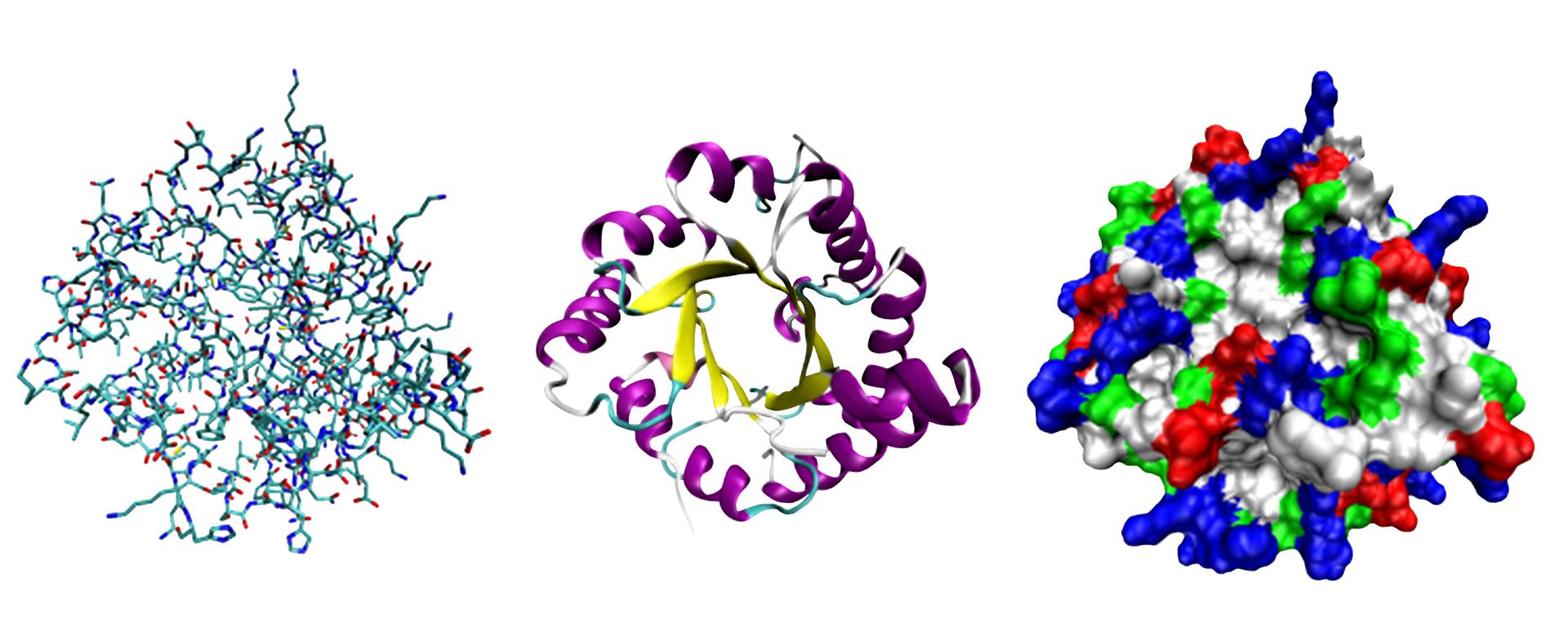 Różne sposoby przedstawiania struktury białek