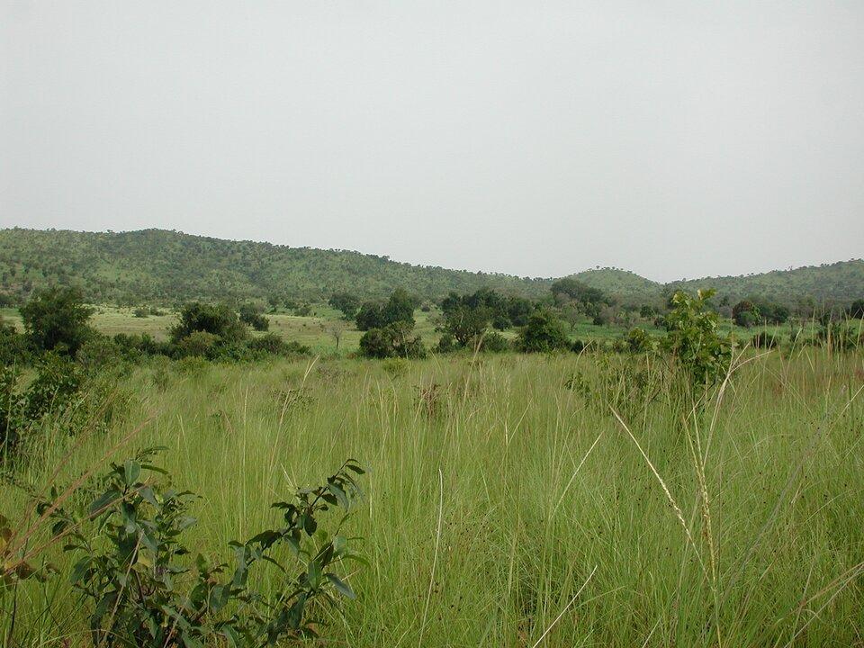 Wporze deszczowej sawanna nabiera zielonych kolorów