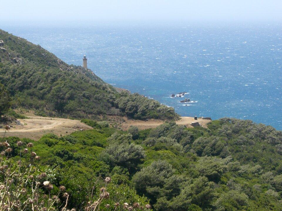 Roślinność śródziemnomorska – makia – na północnych wybrzeżach Afryki