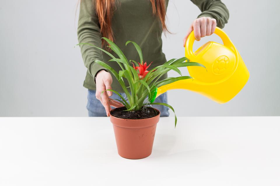 Slajd 7 – posadzona roślina wdoniczce zostaje podlana przez demonstratora