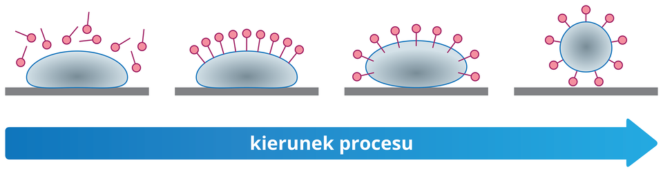 Mechanizm usuwania brudu przez cząsteczki mydeł lub detergentów