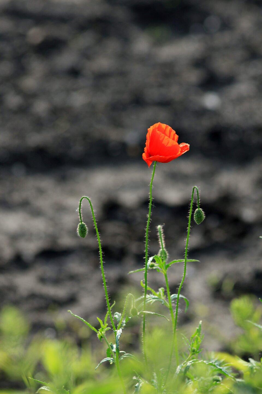 Mak3 Źródło: Małgorzata Skibińska, Contentplus.pl sp. zo.o., fotografia barwna, licencja: CC BY 3.0.