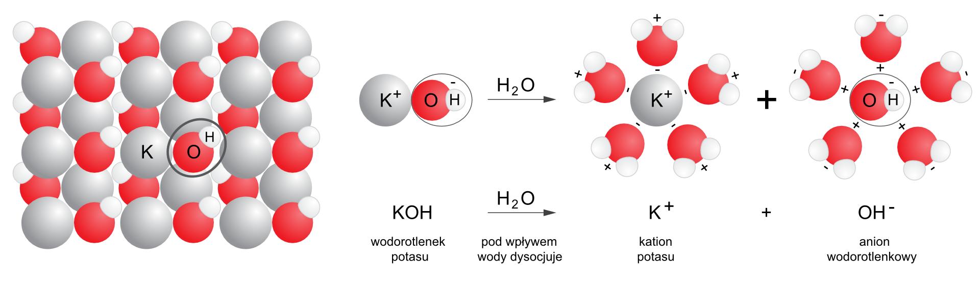 Ilustracja przedstawia proces dysocjacji elektrolitycznej wodorotlenku potasu. Po lewej stronie rysunku mający kształt prostokąta zbiór ułożonych naprzemiennie dużych jasnych kul symbolizujących atomy potasu oraz układów czerwonych ibiałych kul tworzących grupy wodorotlenowe. Całość przypomina zwyglądu szachownicę isymbolizuje sieć krystaliczną wodorotlenku potasu. Wśrodku ipo prawej stronie zapis reakcji rozbijania wodorotlenku potasu KOH na jony Kplus iOH minus pod wpływem wody. Ponad zapisem iopisem słownym znajduje się ilustracja wpostaci zapisu modelowego: układ kul Kplus iOH minus pod wpływem wody zostaje rozbity na jony. Wokół jonów zbierają się cząsteczki wody wtaki sposób, że zarówno kation potasu, jak ianion jodu są otoczone na rysunku przez sześć cząsteczek wody, przy czym kation Kplus otaczają cząsteczki zwrócone stroną naładowaną dodatnie na zewnątrz układu, aanion OH minus otaczają cząsteczki zwrócone stroną naładowaną dodatnie do wnętrza układu.
