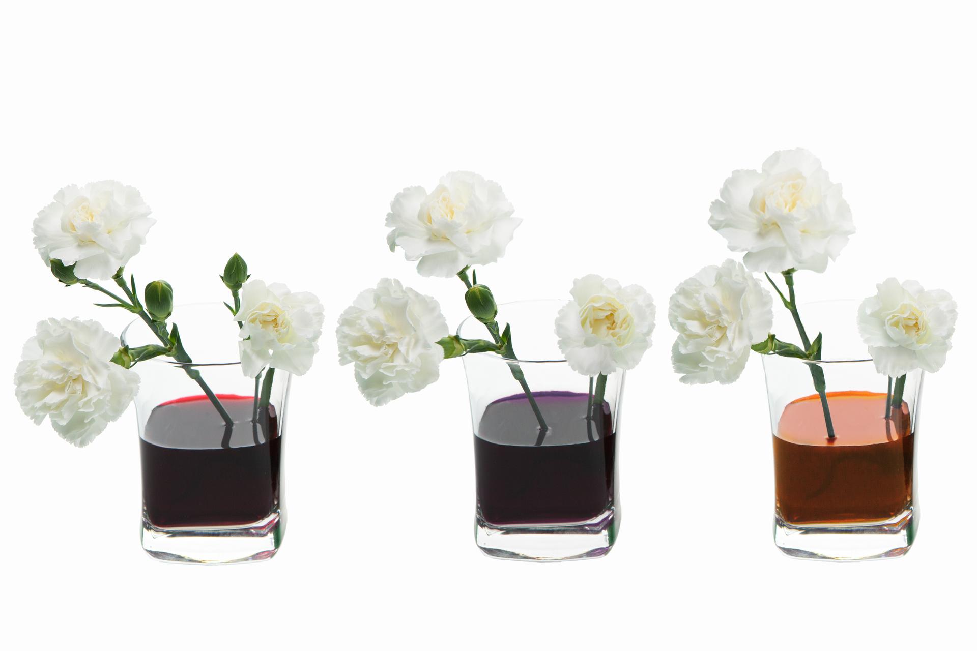 Zdjęcie trzech szklanek wypełnionych wodą oróżnym zabarwieniu, zielonym, niebieskim iczerwonym. Wszklankach umieszczone są po trzy kwiaty koloru białego.
