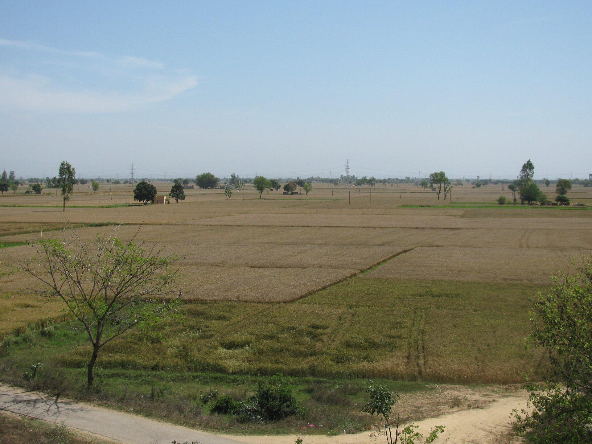 Na zdjęciu rozległe tereny rolnicze, roślinność przesuszona. Pojedyncze drzewa.