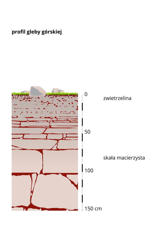 Szósty profil – gleby górskie, na powierzchni zwietrzelina iskała macierzysta