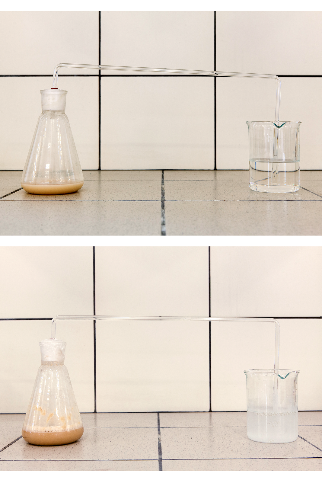 Zdjęcie przedstawiające jak woda wapienna mętnieje pod wpływem gazu wydzielającego się podczas fermentacji alkoholowej