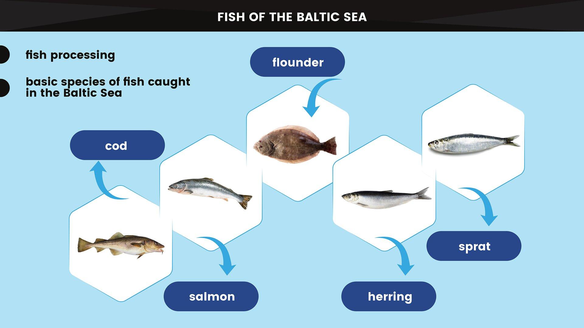 The image presents the basic species of fish caught in the Baltic Sea used in fish processing. Grafika przedstawia podstawowe gatunki ryb poławianych na Morzu Bałtyckim wykorzystywane wprzetwórstwie rybnym.