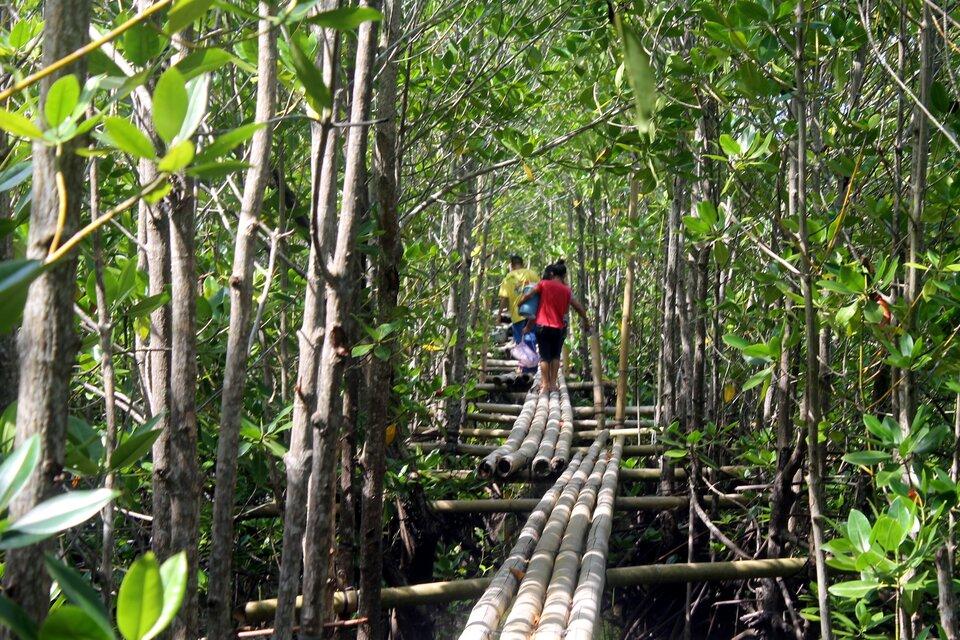Na zdjęciu las tropikalny zbogatą roślinnością. Środkiem przebiega ścieżka, którą ułożono zbali. Ścieżka nie leży bezpośrednio na powierzchni ziemi. Bale opierają się na specjalnie zbudowanym podwyższeniu, rusztowaniu.