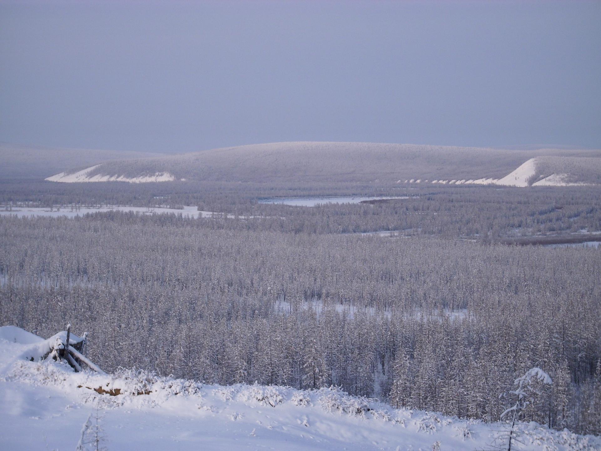Na zdjęciu las iglasty przysypany śniegiem.