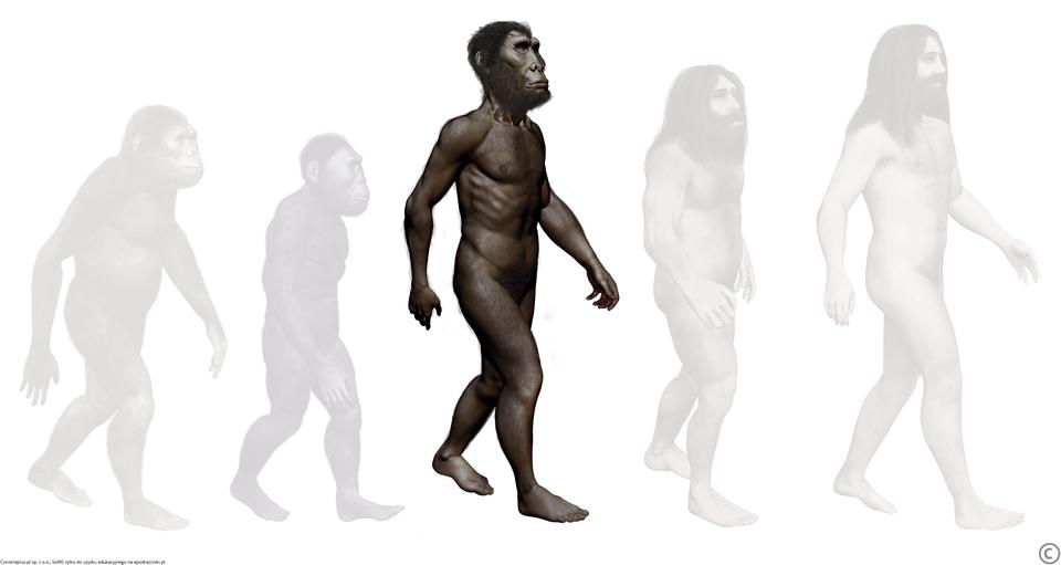 Homo erectus Homo erectus Źródło: Contentplus.pl sp. zo.o., Sol90, tylko do użytku edukacyjnego na epodreczniki.pl.