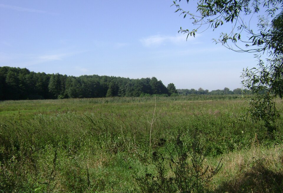Na zdjęciu rozległy płaski teren porośnięty trawą. Wtle las.