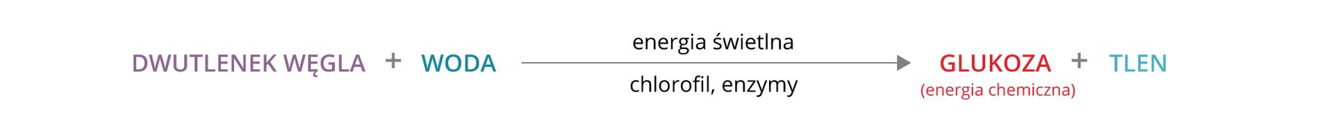 Ilustracja przedstawia proces fotosyntezy wpostaci równania, od substratów do produktów. Od lewej na fioletowo zapisano dwutlenek węgla iznak plus. Następnie jest niebieski napis tlen iszara strzałka. Nad strzałką znajduje się napis: energia świetlna, apod strzałką napis chlorofil ienzymy. Za strzałką jest czerwony napis glukoza, czyli energia chemiczna, znak plus ibłękitny napis tlen