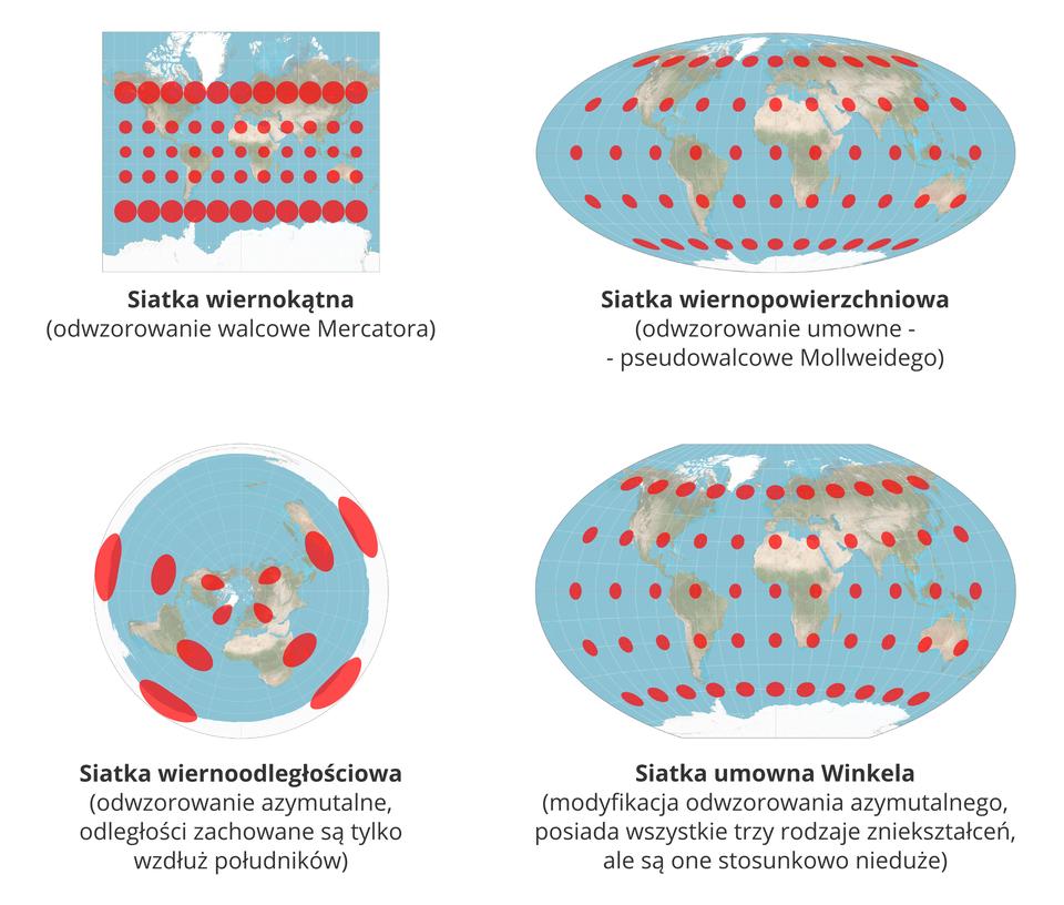 """Ilustracja przedstawia cztery mapy powierzchni Ziemi zzaznaczoną siatką południków irównoleżników. Cztery rysunki ułożone wdwóch rzędach. Dwa rysunki na górze idwa poniżej. Wszystkie ilustracje odwzorowują zniekształcenia wróżnego rodzaju siatkach kartograficznych.Pierwszy rząd, ilustracja na lewo. Mapa świata wkształcie prostokąta. Kolor niebieski wskazuje morza ioceany. Widoczne są kontury kontynentów. Na mapie narysowane są czerwone koła. Koła ułożone są wpięciu poziomych rzędach. Odległość między rzędami jest jednakowa. Wgórnym, pierwszym idolnym, piątym, rzędzie koła są większe. Wdrugim, trzecim iczwartym rzędzie czerwone koła są opołowę mniejsze. Wkażdym rzędzie umieszczono jedenaście punktów leżących blisko jeden obok drugiego. Poniżej ilustracji podpis: sitka wiernokątna. Poniżej wnawiasie okrągłym informacja: odwzorowanie walcowe Mercatora. Druga mapa na prawo. Mapa świata przedstawiona wkształcie spłaszczonej poziomo kuli ziemskiej. Kula ziemska wkształcie elipsy. Na górze ina dole widoczne bieguny. Na mapie widoczne czerwone powierzchnie wkształcie kół ielips. Wszystkie czerwone powierzchnie zajmują podobnej wielkości obszar. Powierzchnie rozmieszczone są wpięciu rzędach położonych poziomo równolegle do siebie. Poniżej podpis: siatka wiernopowierzchniowa. Poniżej informacja wnawiasie okrągłym: odwzorowanie umowne, myślnik, pseudowalcowe Mollweidego. Rząd poniżej. Pierwsza zlewej to mapa wkształcie koła. Na środku mapy widoczny biegun północny położony centralnie. Niebieski kolor na mapie to morza ioceany. Od bieguna rozchodzą się promieniście południki. Wzdłuż południków narysowane są czerwone eliptyczne figury. Czerwone figury oddalone są od siebie dokładnie tak samo. Czerwone eliptyczne figury ułożone są wzdłuż południków. Na każdym południku znajdują się trzy czerwone figury. Układ południków ifigur przybiera kształt litery """"iks"""". Na biegunie, wsamym środku koła, figury są małe. Następne są większe. Największe znajdują się najdalej od centrum koła. Poł"""